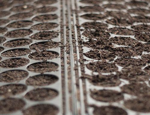 La semina a spaglio con Fertil Granomax: gli ortaggi